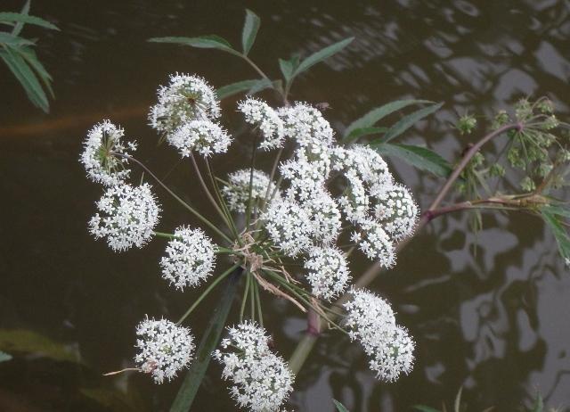 その089 水生植物・抽水植物