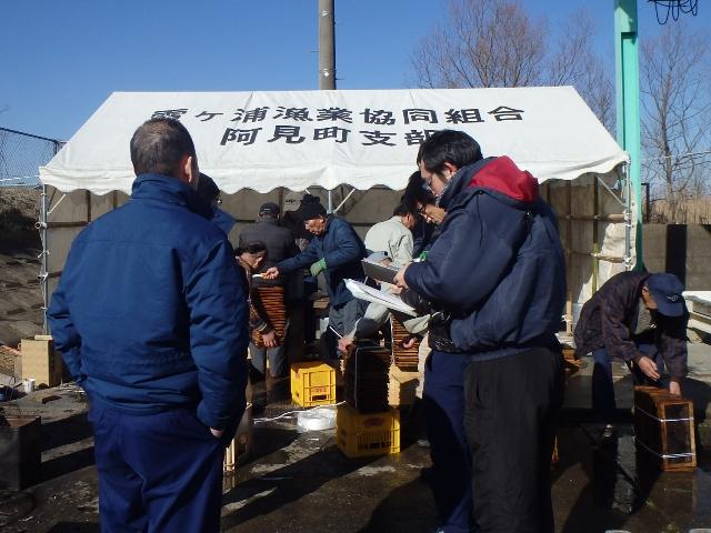 その309 ワカサギの採卵と人工ふ化