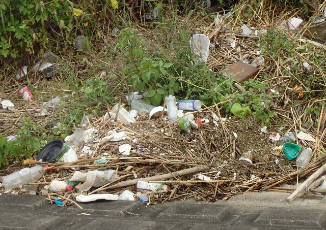 その479 ゴミの多さに呆れ果てる