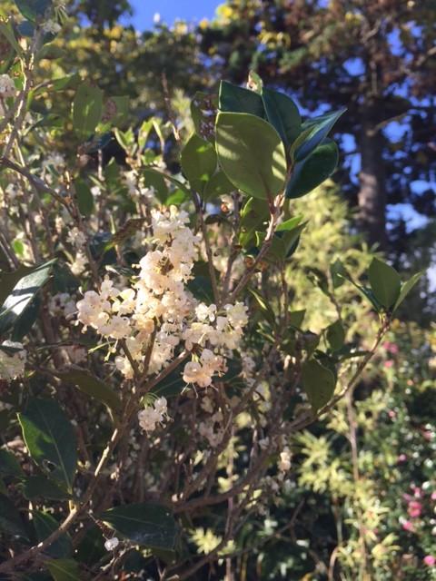 その527 冬の花