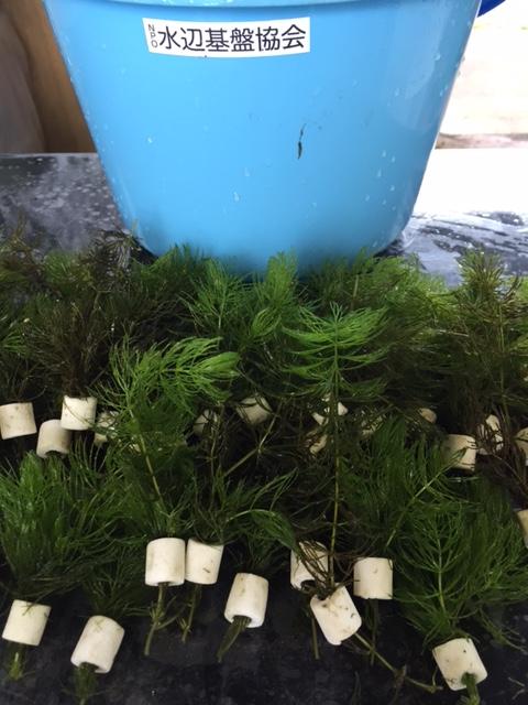 その813 水生植物基金
